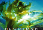 Nhà khoa học nói gì về thuốc Fucoidan trị ung thư ?